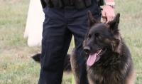Los vigilantes de seguridad de Cyrasa se forman como guías caninos