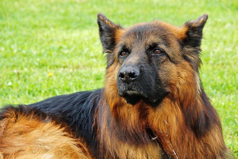 La importancia de la presencia de los perros en el sector de la vigilancia y la seguridad